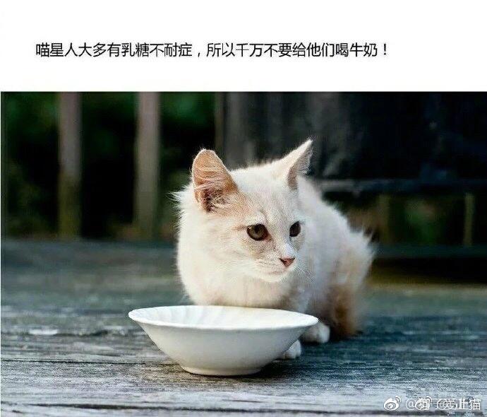 喵星人不能喝牛奶